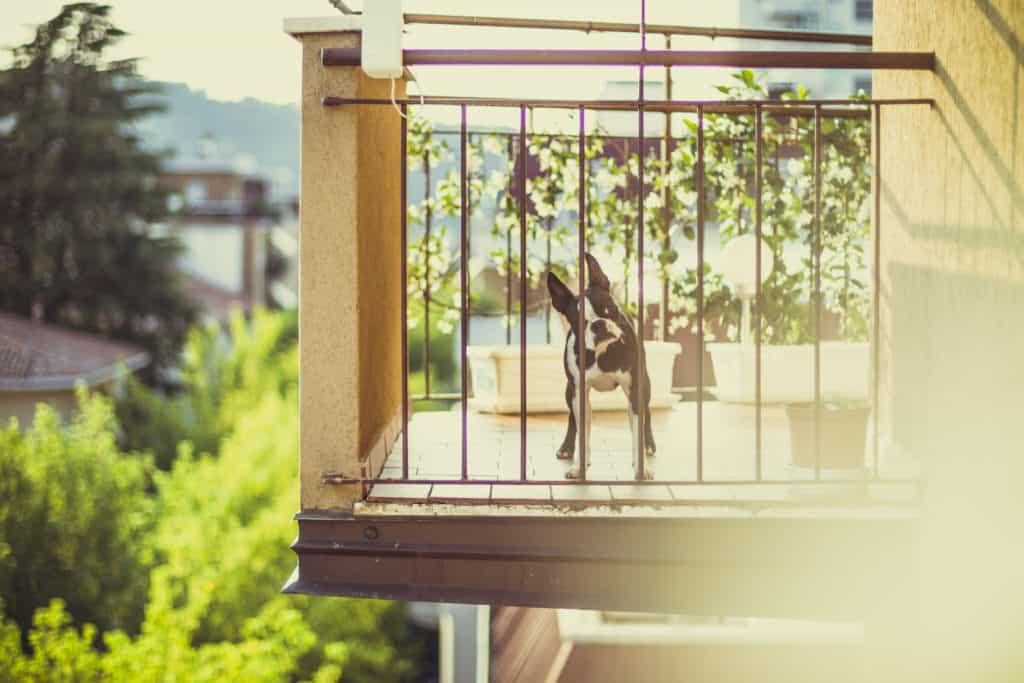 Animais domésticos - cachorro na varanda