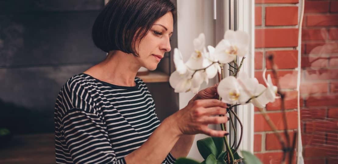 Como cuidar de orquídeas em apartamento: veja as dicas de um especialista