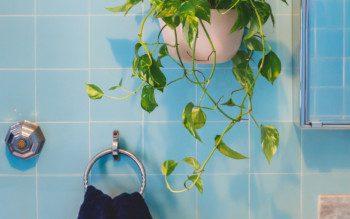 Plantas no banheiro: saiba quais espécies escolher pra decorar o ambiente