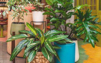 Selvas urbanas: como usar as plantas pra decorar e purificar o ar da sua casa
