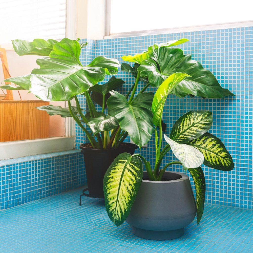 Varanda com plantas - Botânica e Tal