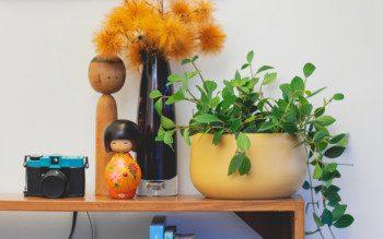 Plantas pendentes: pedacinhos de verde que cabem em qualquer canto da sala