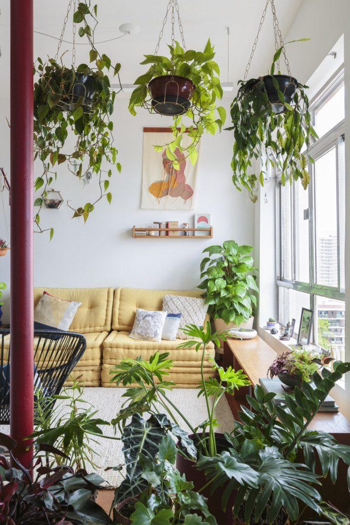 Histórias de casa - plantas